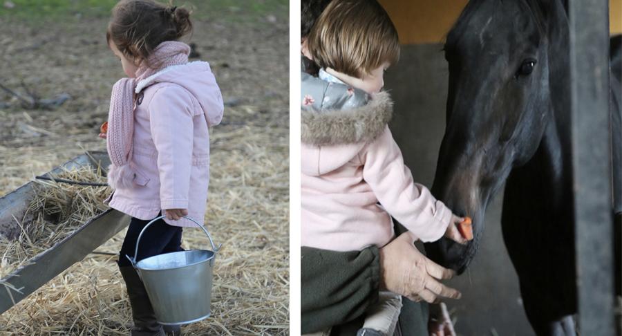caballos-coco-y-manuela-los-enebrales